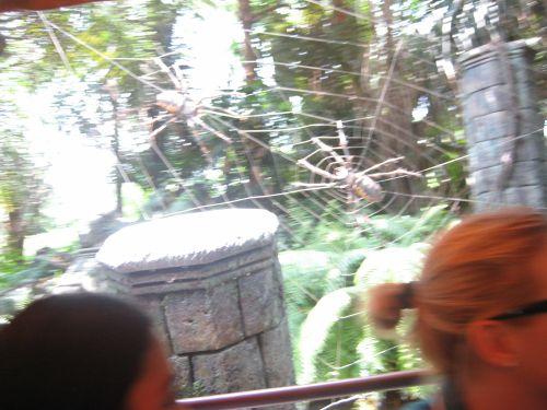 HongKong Disneyland Pirateland Jungle River Cruise