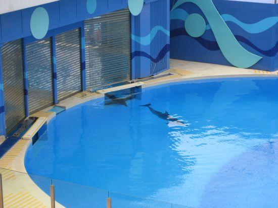 Dolphin Show at Ocean Park