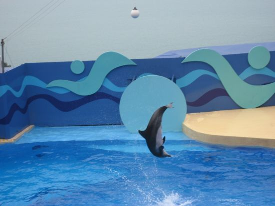 Ocean Park Dolphin and Sea Lion Show