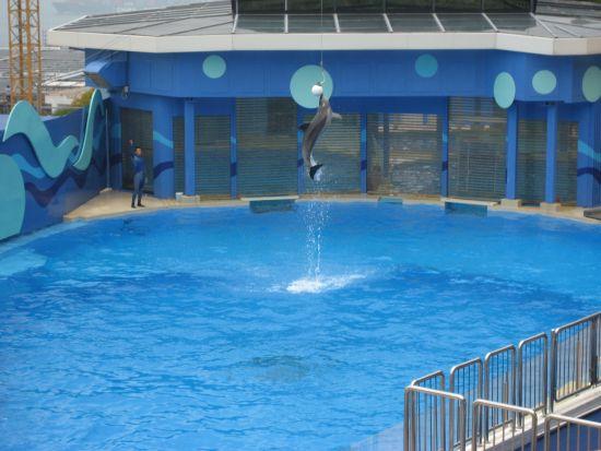 Hong Kong Ocean Park Dolphin and Sea Lion Show