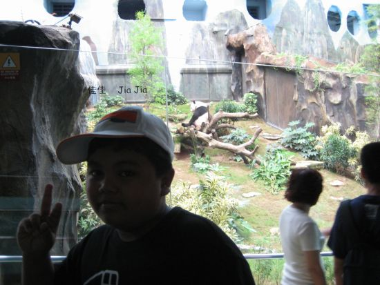 Ocean Park Giant Panda