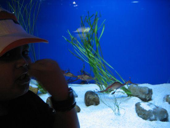 Ocean Park Aquarium, HK