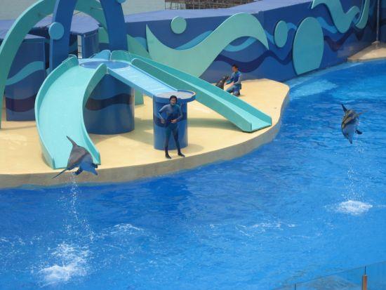 HK Dolphin Show