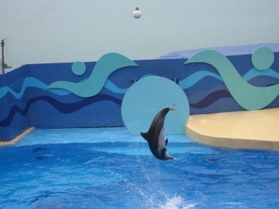 Dolphin at Ocean Park